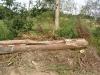 Domažličky- dřevěný požerák nalezený při čištění rybníka, 2019